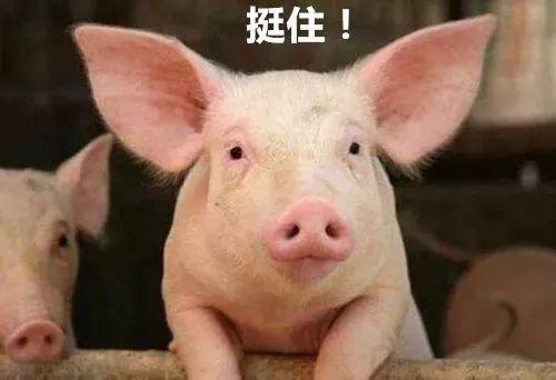 """猪年要养猪?资本推动下,丁磊们炒作的猪也要""""吃补贴""""长肉"""